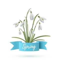 Snowdrop flowers with blue ribbon vector