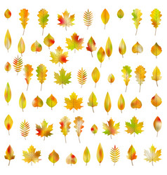Big set of 60 colorful autumn leaves eps 10 vector