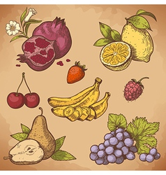 icon fruits retro vector image vector image