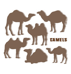 Camel silhouettes set vector