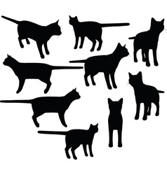 cat collection silhouette vector image