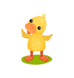 Cute little yellow duckling character standing on vector