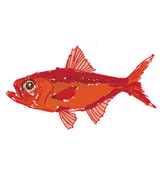 Red alfonsino fish on white background vector