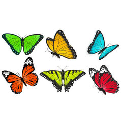set realistic bright and colorful butterflies vector image