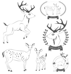 Set of vintage deer emblems labels logo vector image vector image
