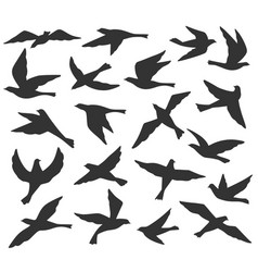 bird silhouettes flying birds flock animal vector image