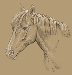 Horse portrait-18 on brown background vector