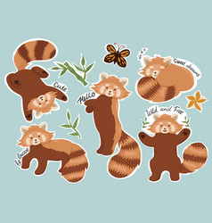 set stickers with red panda graphics vector image