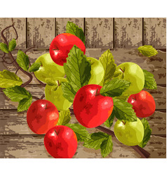 watercolor apples on wooden background vector image