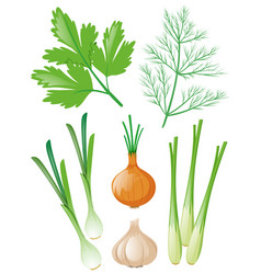 different types of vegetables on white vector image vector image