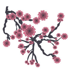 branch of pink japanese cherry tree on white vector image