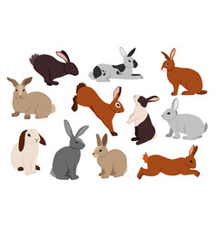 Cartoon hare cute bunny in different poses vector