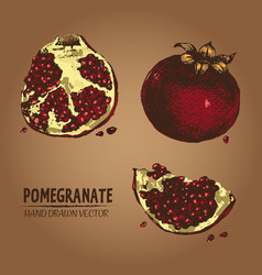 digital detailed color pomegranate hand vector image