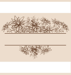 edelweiss hand drawn borders and decorations vector image