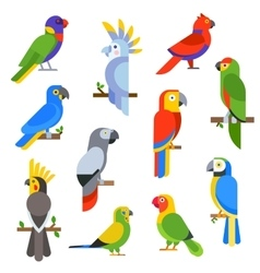 Cartoon parrots set and parrots wild animal birds vector image vector image
