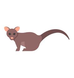 flat style of brushtail possum vector image