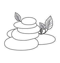 contour of spa therapy lava stones and creeper vector image vector image