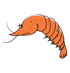angry shrimp on white background vector image