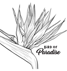 Bird paradise hand drawn social media banner vector