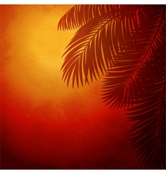 Branches palm trees at sunset vector