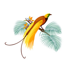 greater bird-of-paradise with yellow tail sitting vector image