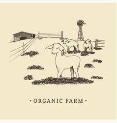organic farm sketched drawing vector image