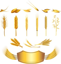 Wheat set vector