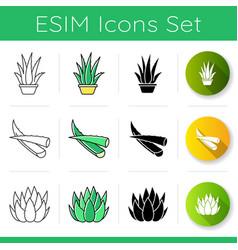 Aloe vera icons set houseplant in pot potted aloe vector