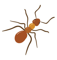 brown ant on white background vector image
