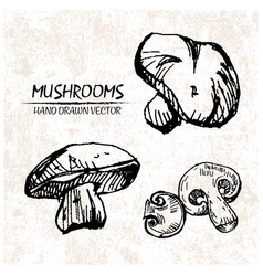Digital detailed mushrooms hand drawn vector