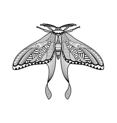 moth hand drawn vector image