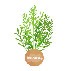 Rosemary spice and label vector