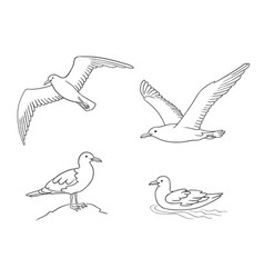Seagulls in outlines vector