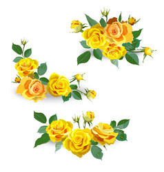 Floral background with yellow roses vector