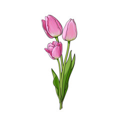 hand drawn bunch of three side view pink tulip vector image vector image