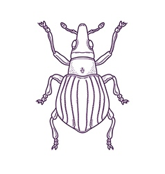 Outline beetle bug insect vector