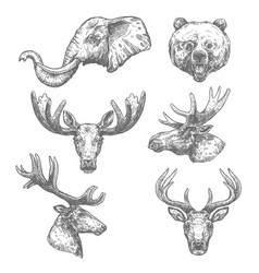 animal sketch set of african and forest mammal vector image vector image