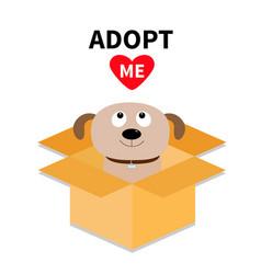 Adopt me dont buy dog inside opened cardboard vector