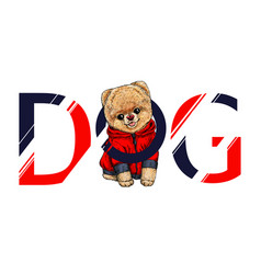 Cute pomeranian toy dog in red hoodie vector