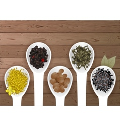 Different spices in spoons vector