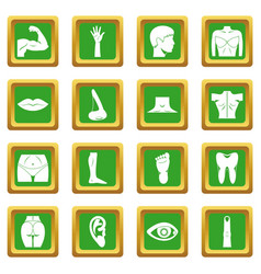 Body parts icons set green vector