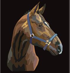 Colorful horse portrait 27 vector