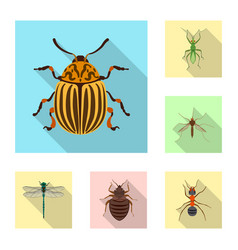 isolated object of insect and fly logo collection vector image
