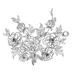 sketch blooming peonies vector image