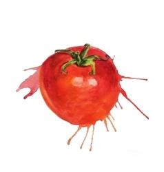 Watercolor tomato sketch vector image vector image