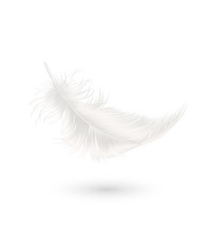3d realistic falling white fluffy twirled vector image