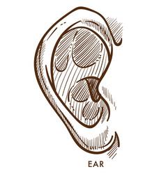 Ear perception organ otorhinolaryngology isolated vector