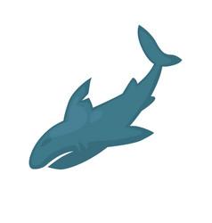 abstract blue shark vector image