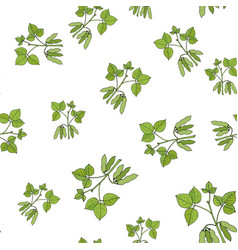 seamless pattern with soybean vector image