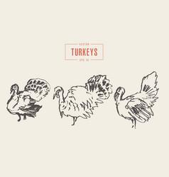 set turkeys drawn sketch vector image vector image